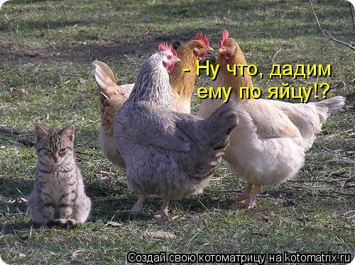 Котоматрица: - Ну что, дадим  ему по яйцу!?