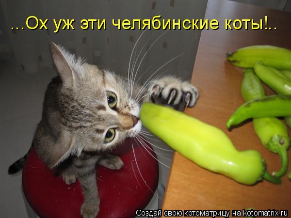 Котоматрица: ...Ох уж эти челябинские коты!..