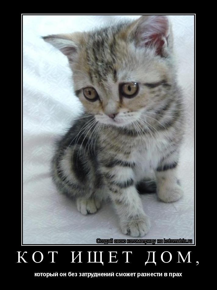 Котоматрица: Кот ищет дом, который он без затруднений сможет разнести в прах