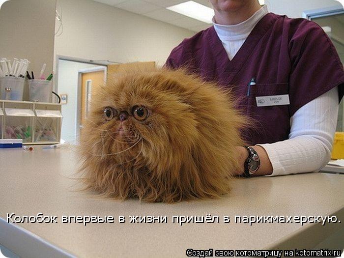 Котоматрица: Колобок впервые в жизни пришёл в парикмахерскую.