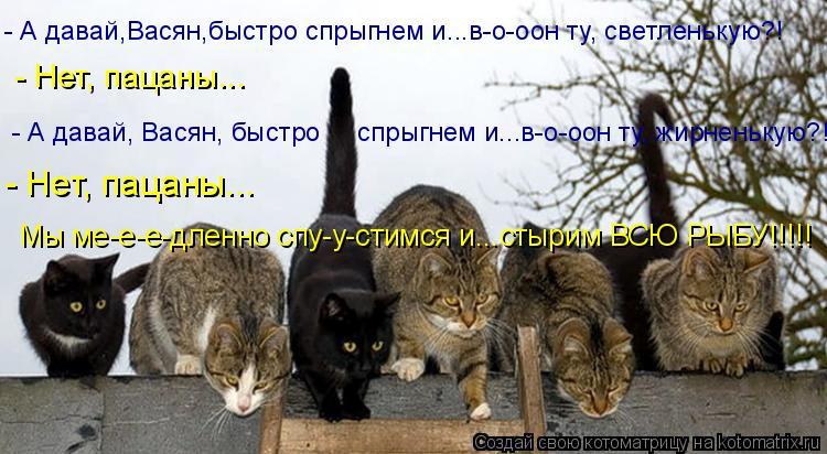 Стих уличный кот