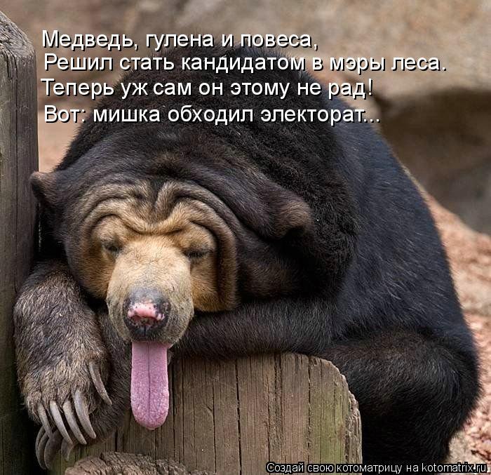 Котоматрица: Теперь уж сам он этому не рад! Решил стать кандидатом в мэры леса. Медведь, гулена и повеса, Вот: мишка обходил электорат...