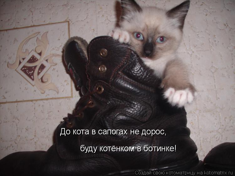 Котоматрица: До кота в сапогах не дорос, буду котёнком в ботинке!