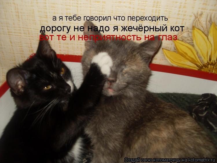 Котоматрица: а я тебе говорил что переходить дорогу не надо я жечёрный кот вот те и неприятность на глаз
