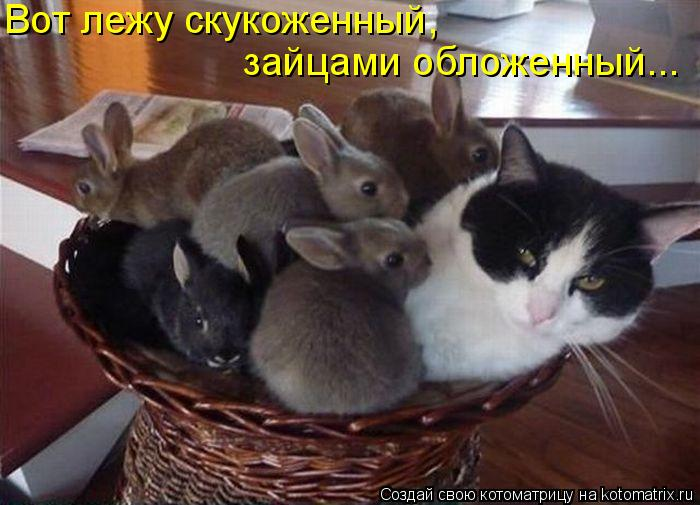 Котоматрица: Вот лежу скукоженный, зайцами обложенный...