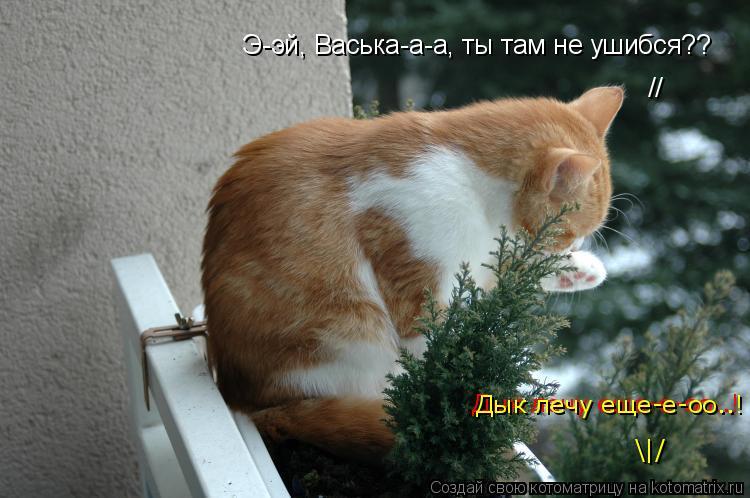 Котоматрица: Э-эй, Васька-а-а, ты там не ушибся?? Дык лечу еще-е-оо..! Дык лечу еще-е-оо..! \ / //