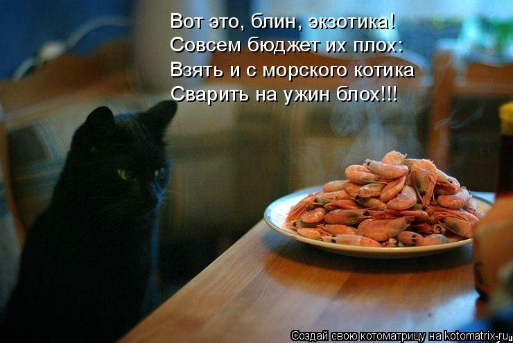 Котоматрица: Вот это, блин, экзотика! Совсем бюджет их плох: Взять и с морского котика Сварить на ужин блох!!!
