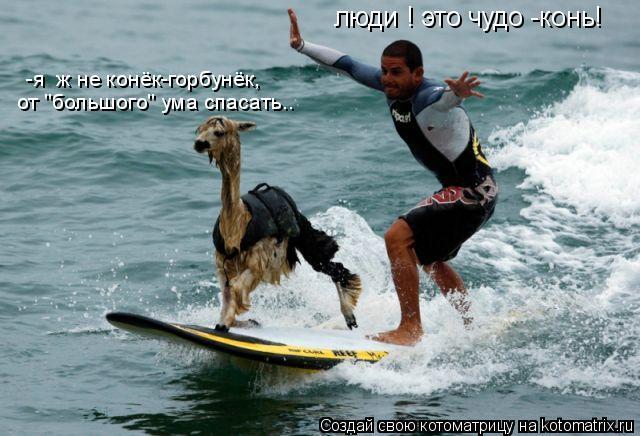 """Котоматрица: люди ! это чудо -конь! -я  ж не конёк-горбунёк, от """"большого"""" ума спасать.."""