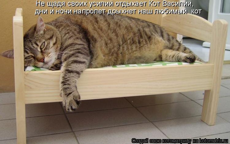 Котоматрица: Не щадя своих усилий отдыхает Кот Василий,   дни и ночи напролет дрыхнет наш любимый  кот