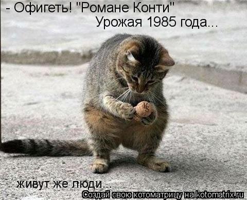 """Котоматрица: - Офигеть! """"Романе Конти"""" Урожая 1985 года... живут же люди..."""