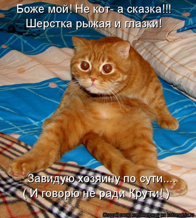 Котоматрица: Боже мой! Не кот- а сказка!!! Шерстка рыжая и глазки! Завидую хозяину по сути.... ( И говорю не ради Крути! )