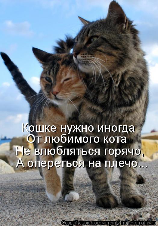 Кошке нужно иногда От любимого кота Не влюбляться горячо, А опереться