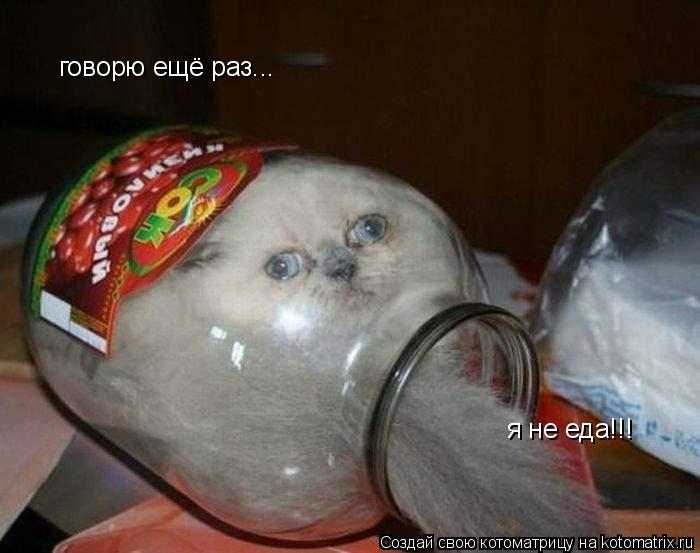 Котоматрица: говорю ещё раз... я не еда!!!