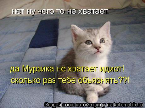 Котоматрица: нет ну чего то не хватает да Мурзика не хватает идиот! сколько раз тебе обьяснять??!