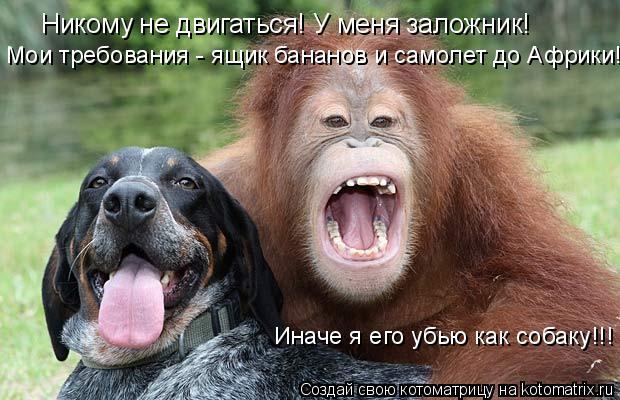 Котоматрица: Никому не двигаться! У меня заложник! Мои требования - ящик бананов и самолет до Африки!! Иначе я его убью как собаку!!!