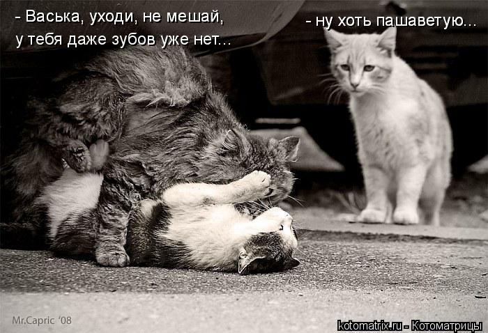 Котоматрица: - Васька, уходи, не мешай,  - Васька, уходи, не мешай,  у тебя даже зубов уже нет... - ну хоть пашаветую... - ну хоть пашаветую...