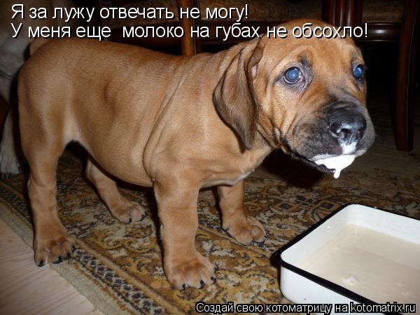 Котоматрица: Я за лужу отвечать не могу! У меня еще  молоко на губах не обсохло!