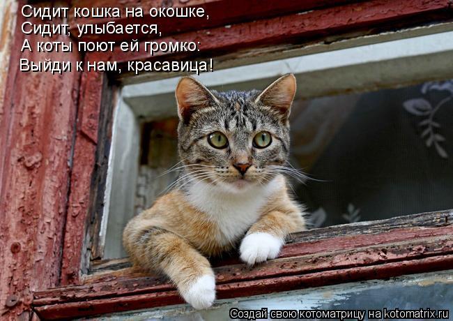Котоматрица: Сидит кошка на окошке, Сидит, улыбается, А коты поют ей громко: «Выйди к нам, красавица!»