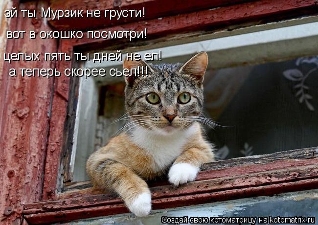 Котоматрица: эй ты Мурзик не грусти! вот в окошко посмотри! целых пять ты дней не ел! а теперь скорее сьел!!!