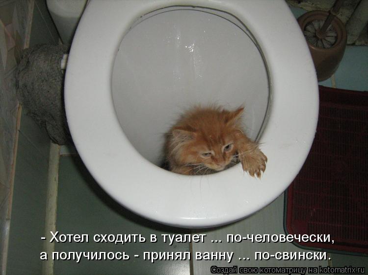 Котенок редко ходит в туалет по большому