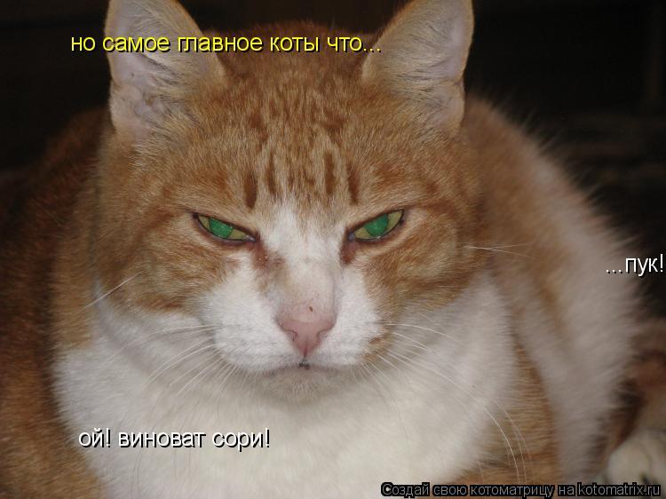 Котоматрица: ...пук! ой! виноват сори! но самое главное коты что...