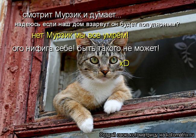Котоматрица: смотрит Мурзик и думает... надеюсь если наш дом взарвут он будет популярным? нет Мурзик мы все умрём! ого нифига себе! быть такого не может! хD
