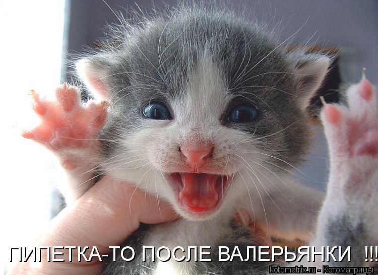 Котоматрица - ПИПЕТКА-ТО ПОСЛЕ ВАЛЕРЬЯНКИ  !!!!