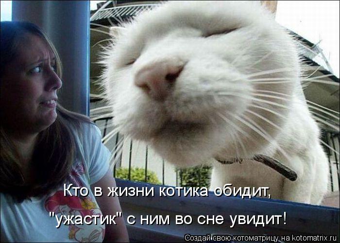 "Котоматрица: Кто в жизни котика обидит, ""ужастик"" с ним во сне увидит!"