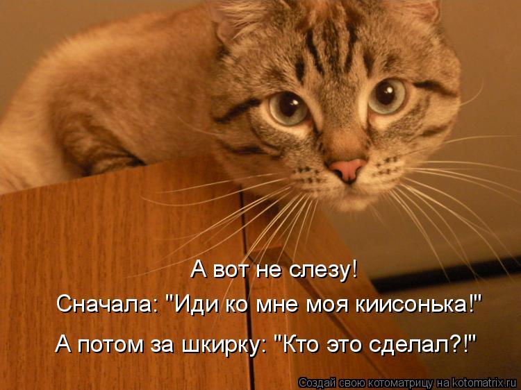 Котоматриця!)))) - Страница 4 826800
