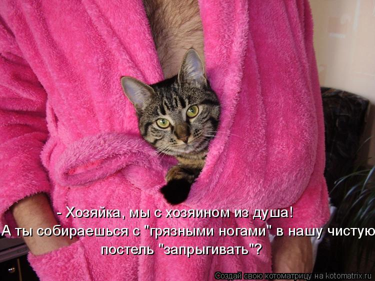 Котоматриця!)))) - Страница 7 826889