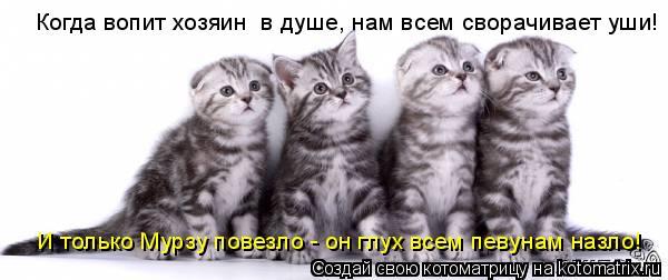 Котоматрица: Когда вопит хозяин  в душе, нам всем сворачивает уши! И только Мурзу повезло - он глух всем певунам назло!