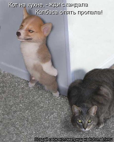 Котоматрица: - жди скандала Кот на кухне, Колбаса опять пропала!