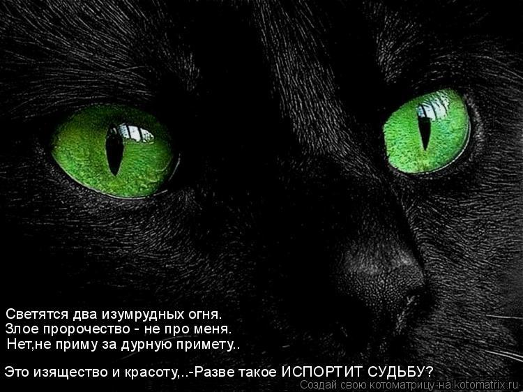 Котоматрица: Светятся два изумрудных огня. Злое пророчество - не про меня. Нет,не приму за дурную примету.. Это изящество и красоту,..-Разве такое ИСПОРТИТ
