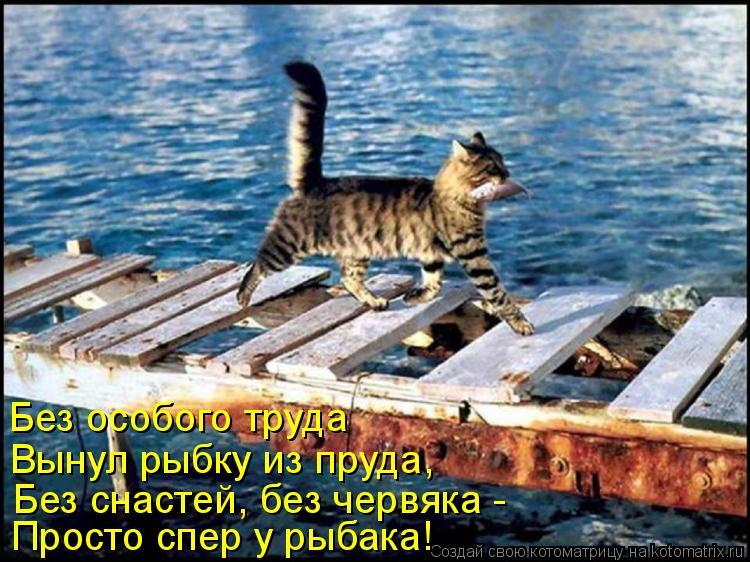 Котоматрица: Просто спер у рыбака! Без особого труда Вынул рыбку из пруда, Без снастей, без червяка -