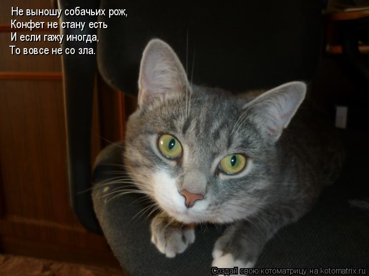 Котоматрица: Не выношу собачьих рож, Конфет не стану есть И если гажу иногда, То вовсе не со зла…