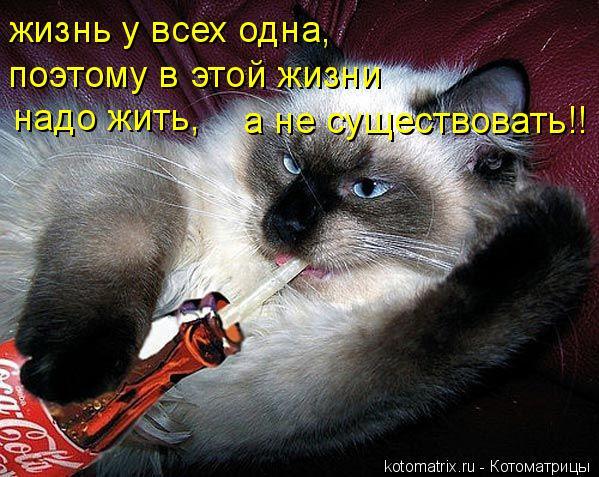 Котоматрица: жизнь у всех одна, поэтому в этой жизни надо жить, а не существовать!!