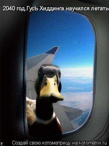 Котоматрица: 2040 год.ГусЬ Хиддинга научился летать!
