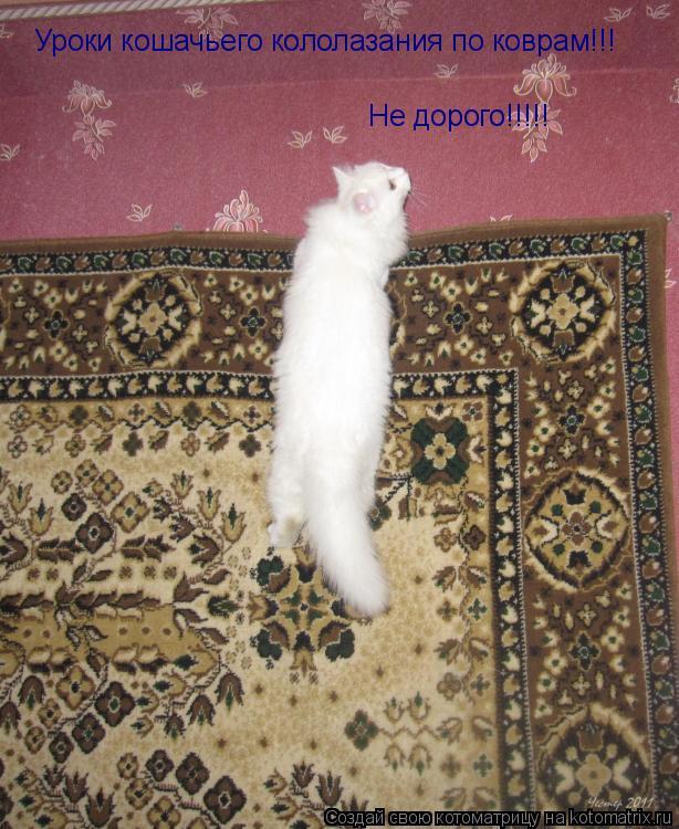 Котоматрица: Уроки кошачьего кололазания по коврам!!! Не дорого!!!!!