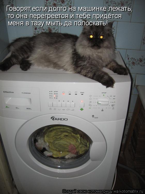 Котоматрица: Говорят,если долго на машинке лежать, то она перегреется и тебе придётся меня в тазу мыть,да полоскать!