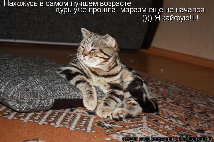 Котоматрица: Нахожусь в самом лучшем возрасте -  дурь уже прошла, маразм еще не начался )))) Я кайфую!!!!