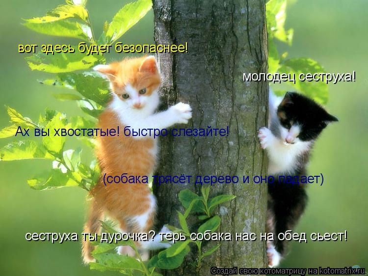 Котоматрица: молодец сеструха! вот здесь будет безопаснее! Ах вы хвостатые! быстро слезайте! (собака трясёт дерево и оно падает) сеструха ты дурочка? терь