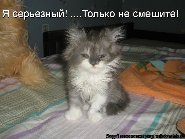 Котоматрица: Я серьезный! ....Только не смешите!