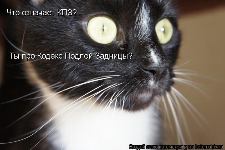 Котоматрица: Что означает КПЗ? Ты про Кодекс Подлой Задницы?