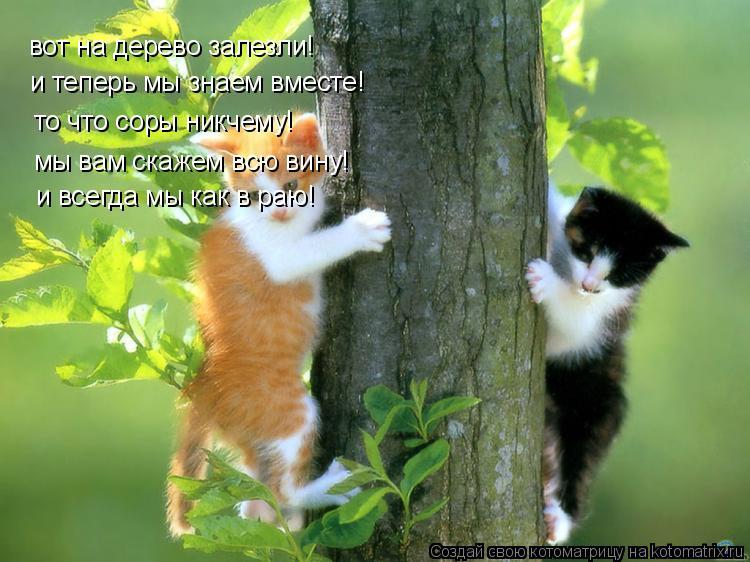 Котоматрица: вот на дерево залезли! и теперь мы знаем вместе! то что соры никчему! мы вам скажем всю вину! и всегда мы как в раю!