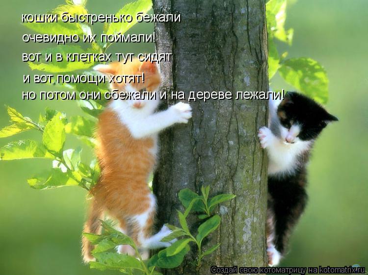 Котоматрица: кошки быстренько бежали очевидно их поймали! вот и в клетках тут сидят и вот помощи хотят! но потом они сбежали и на дереве лежали!