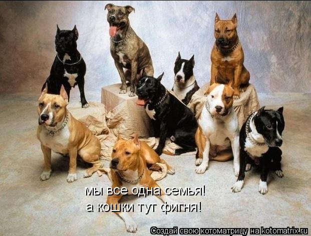 Котоматрица: мы все одна семья! а кошки тут фигня!