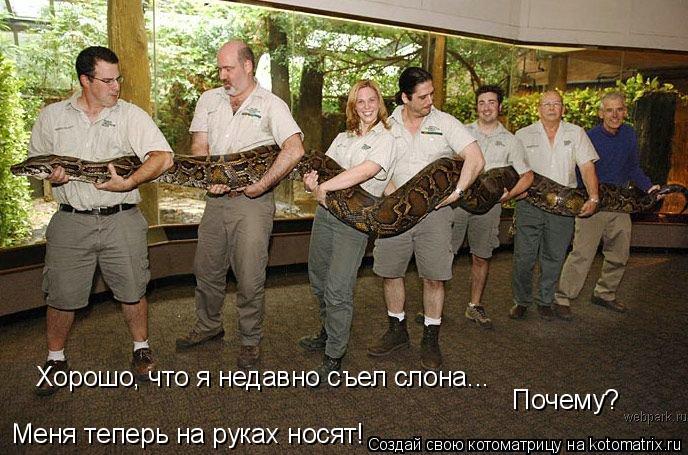 Котоматрица: Хорошо, что я недавно съел слона... Почему? Меня теперь на руках носят!