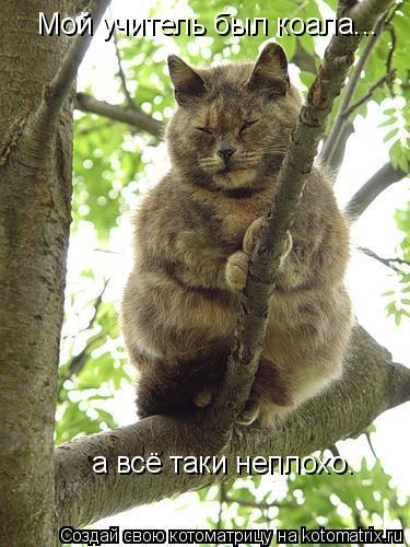 Котоматрица: Мой учитель был коала... а всё таки неплохо.