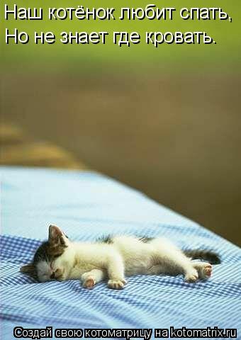 Котоматрица: Наш котёнок любит спать, Но не знает где кровать.