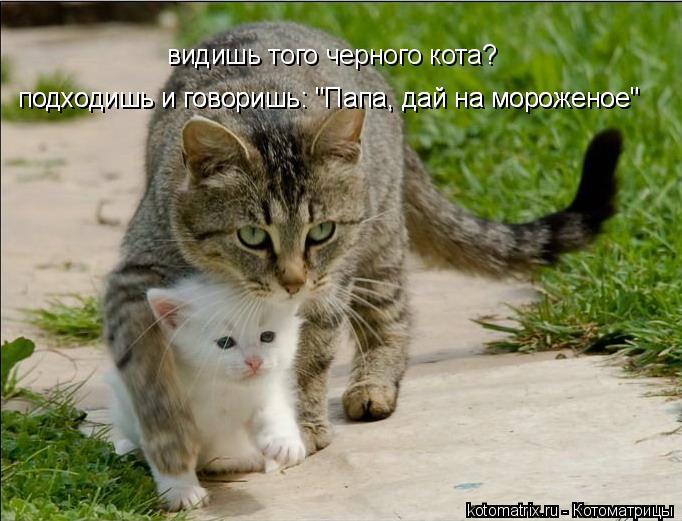 """Котоматрица: видишь того черного кота?  подходишь и говоришь: """"Папа, дай на мороженое"""" подходишь и говоришь: """"Папа, дай на мороженое"""""""